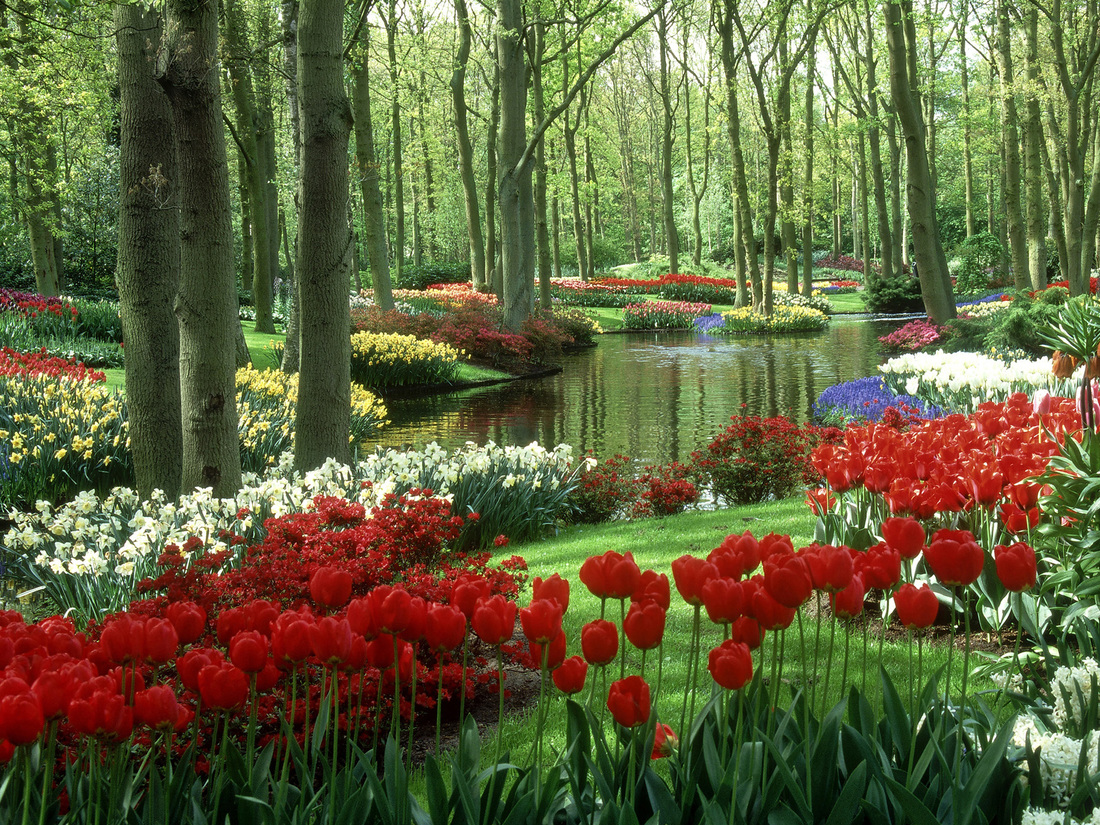 Wo World S Most Beautiful Flowers - Keukenhof is the world s most beautiful spring park seven million flower bulbs make for a unique experience tulips from holland are world famous